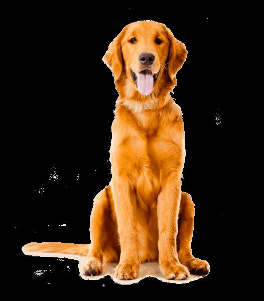 Εκπαίδευση σκύλων Θεσσαλονίκη