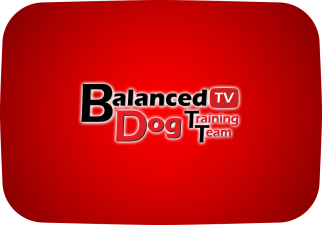Balanced Dog Training Team - YouTube λογότυπο