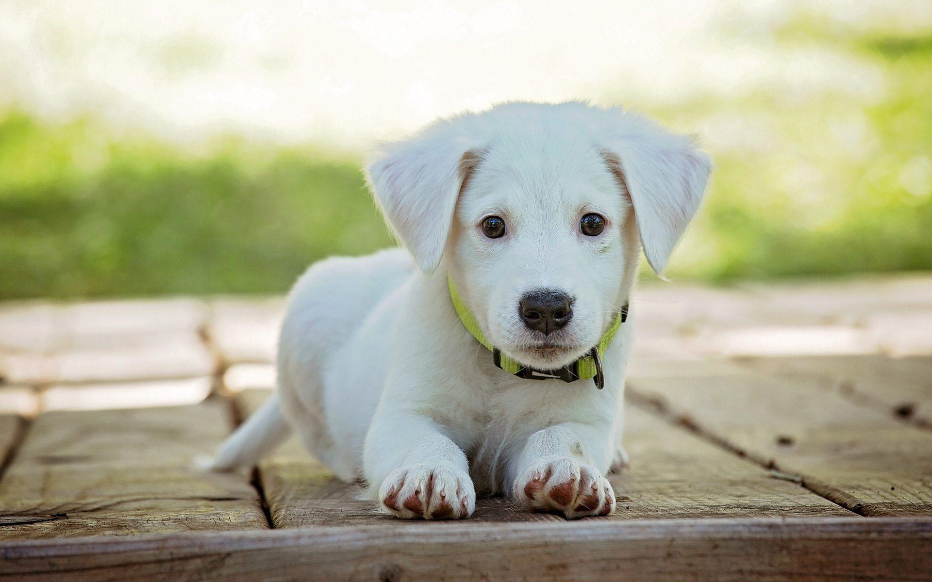 95cac6c2b5fa Σκέφτομαι να πάρω σκύλο