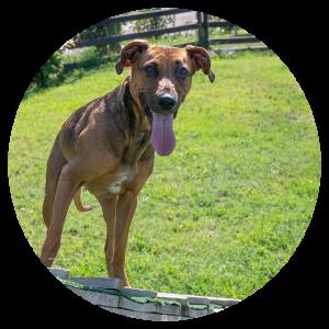 Bitter - Balanced Dog Training Team Θεσσαλονίκη