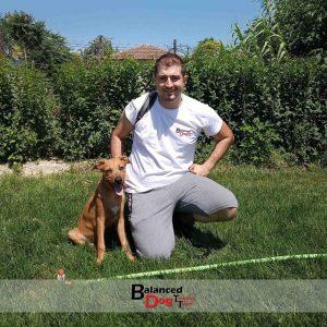 Εκπαίδευση σκύλου Λάρισα Και Βόλο Balanceddog