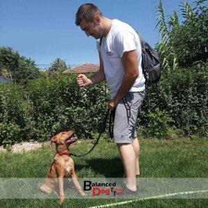 Εκπαιδευτής σκύλων Λάρισα και Βόλο Balanceddog