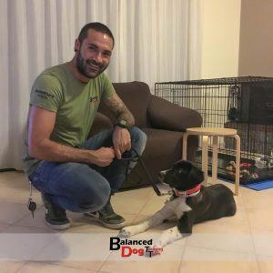 Βασική Εκπαίδευση σκύλων στη Θεσσαλονίκη