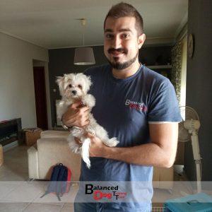 Εκπαιδευση κουταβιών στη Balanced Dog Training Team γίνετε στο χώρο του εκπαιδευτηρίου ή στο χώρο του πελάτη στο Βόλο.