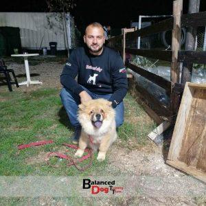 Η Βασική Εκπαίδευση Σκύλου στη Balanced Dog Training Team γίνετε στο χώρο του εκπαιδευτηρίου ή στο χώρο του πελάτη στην θεσσαλονίκη.