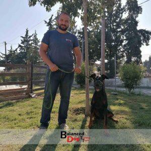 Η Διόρθωση Προβλημάτων Συμπεριφοράς σκύλου στη Balanced Dog Training Team γίνετε στο χώρο του εκπαιδευτηρίου ή στο χώρο του πελάτη στην θεσσαλονίκη.