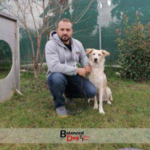 εκπαίδευση σκύλων θεσσαλονίκη Balanced Dog Training Team
