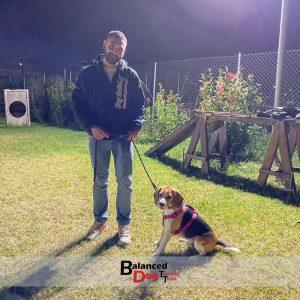 εκπαίδευση beagle θεσσαλονίκη Balanced Dog Training Team