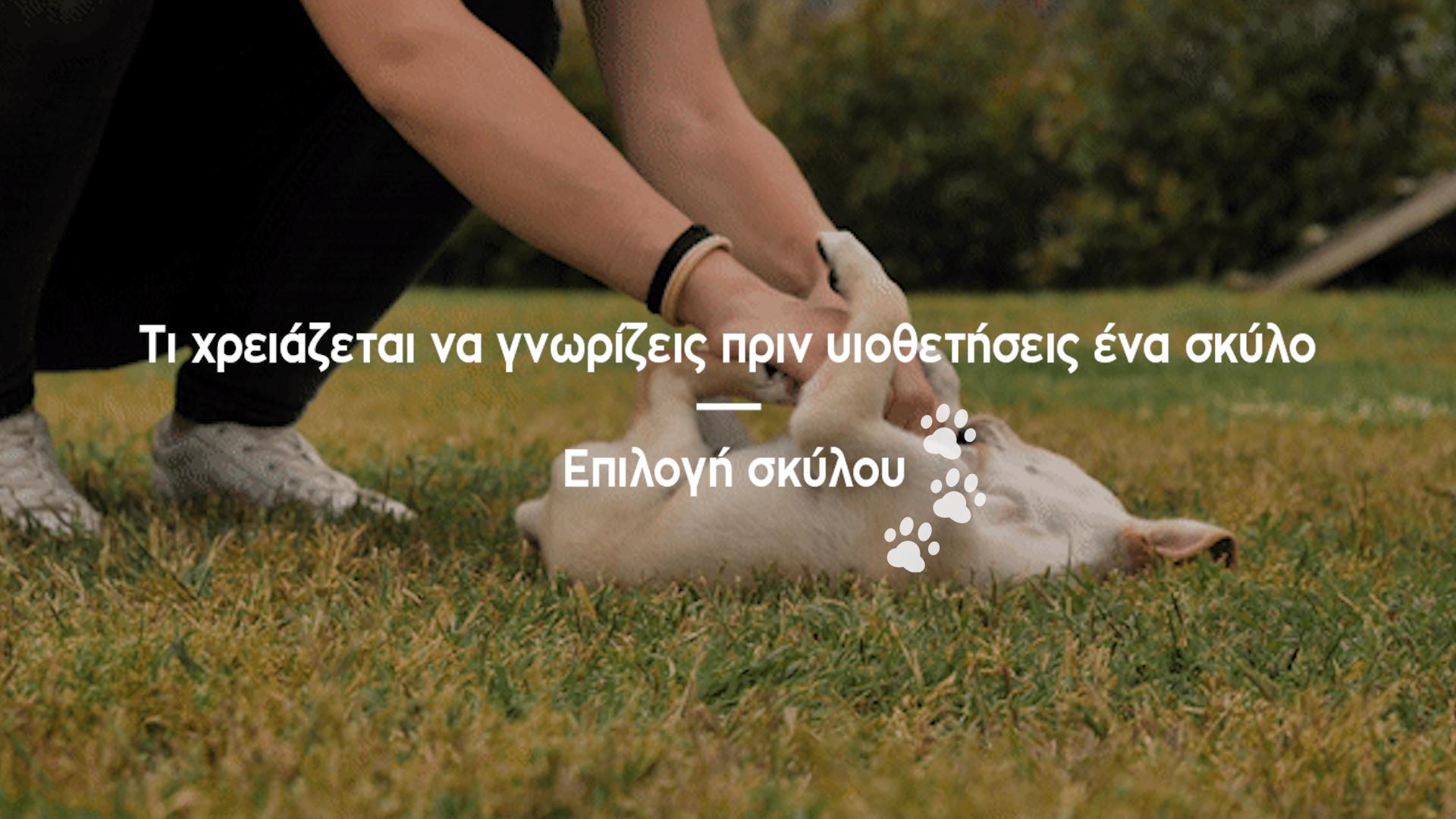 thumbnail-ti-xreiazetai-na-gnwrizeis-prin-uiothetiseis-ena-skylo-arthro