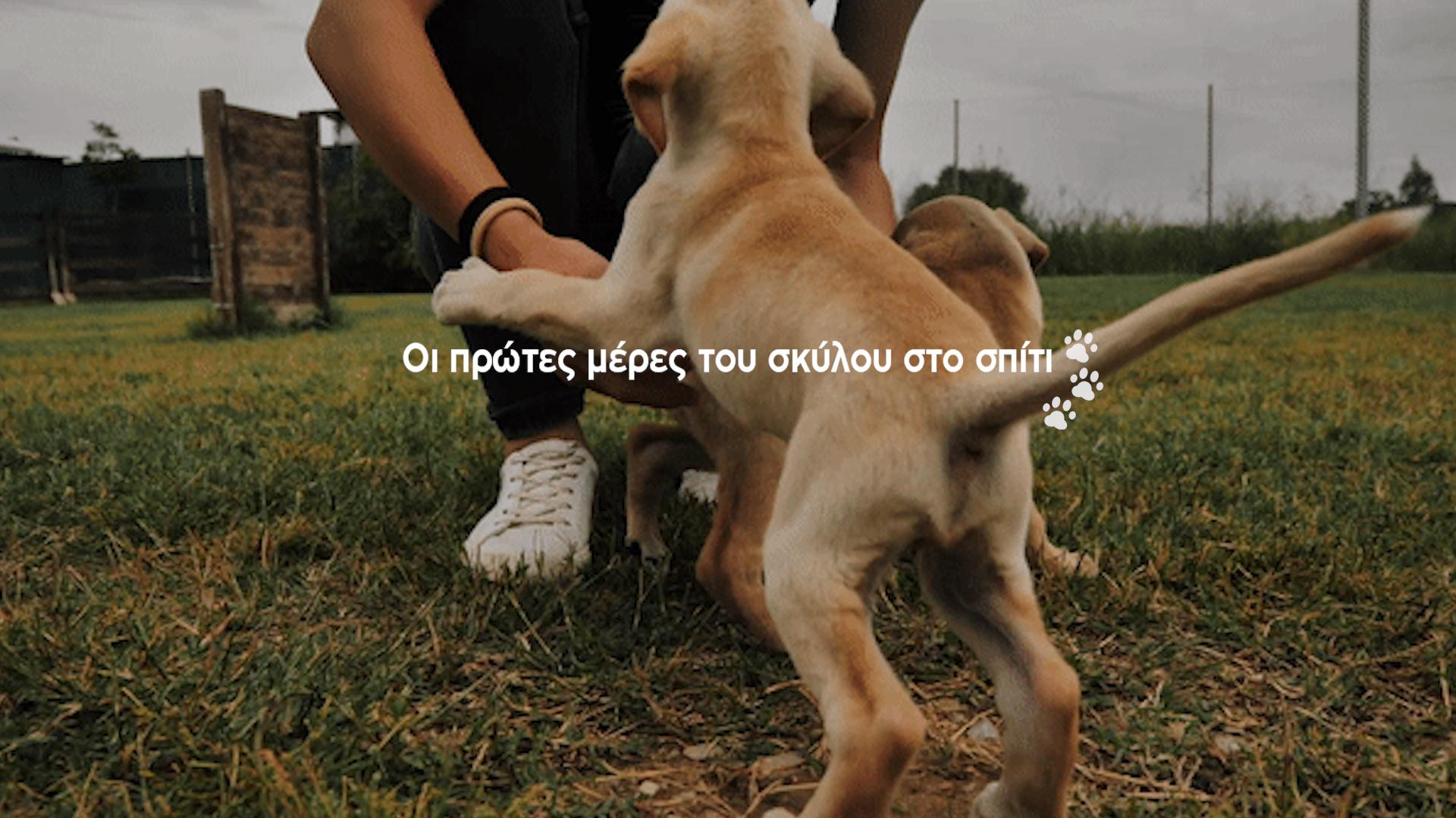 oi_prwtes_meres_tou_koutaviou_sto_spiti