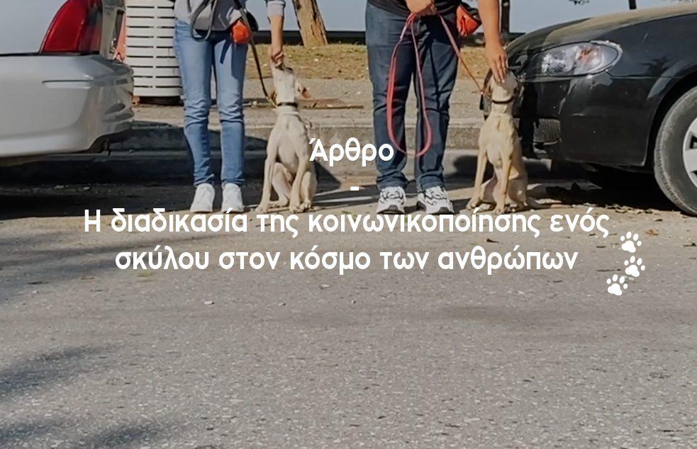 Κοινωνικοποίηση σκύλων με τους ήχους των αυτοκινήτων