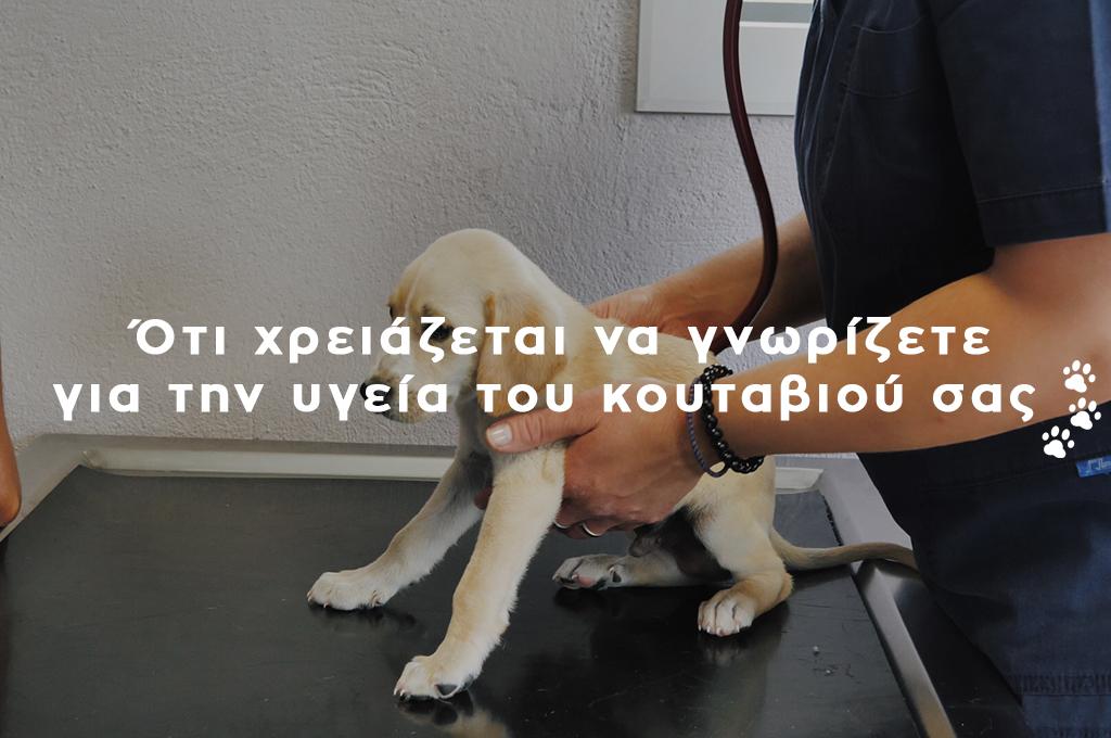Ο κτηνίατρος εξετάζει το κουτάβι Bidi